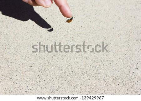 ladybug on a child's finger hanging on the tip #139429967