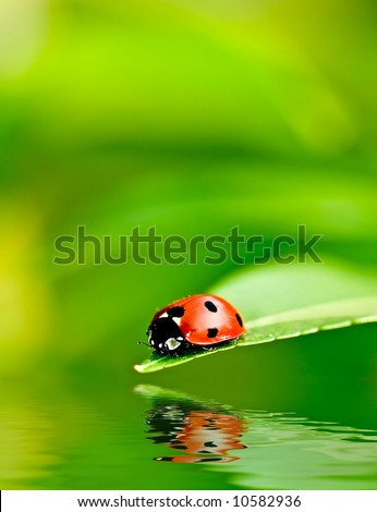 Ladybug on a leaf reflected on water