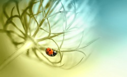 Ladybug on beautiful fluffy unusual flower plant summer spring in nature macro. Soft selective focus, amazing artistic image. Toning in pastel light tones of golden, blue and green.