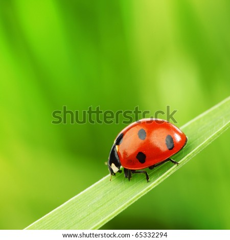 Stock Photo ladybug on grass