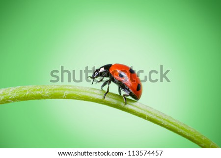 ladybug on grass on a green background