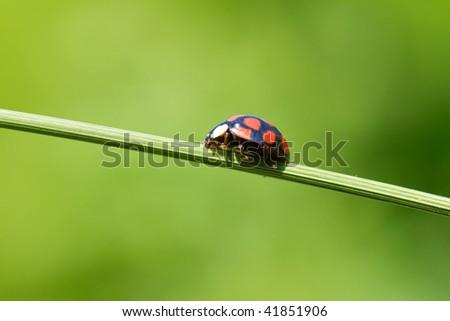 ladybug on grass stem