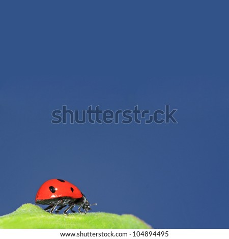 ladybug on green herb under blue sky