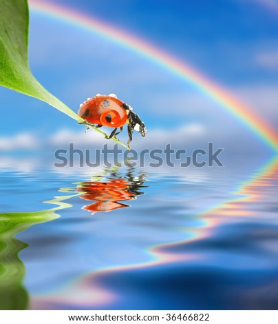 Ladybug on green leaf over blue sky background