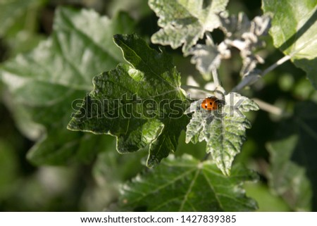 Ladybug on the leaves on a branch picture for text