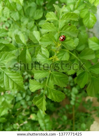 Ladybug on the tree at garden in the morning. (blurred picture)
