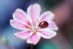 Ladybug pink flower drops house