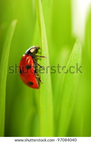 ladybug sitting on the blade of grass