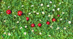 Ladybug toys on a fresh summer lawn with lots of small daisy flowers