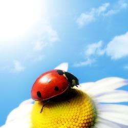 ladybug under blue sky