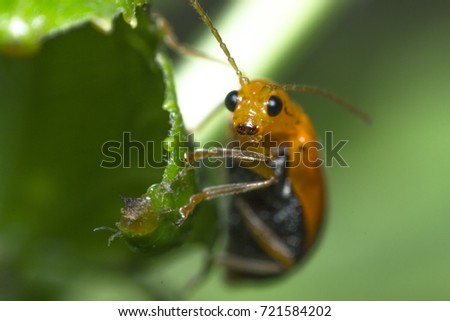 ladybug with macro insect,Macro bugs and insects. Nature in spring concept. #721584202