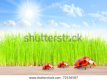 Ladybugs family on The Road. Traveling metaphor.