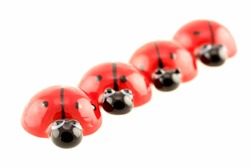 ladybugs isolated