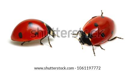 Photo of Ladybugs isolated on white background