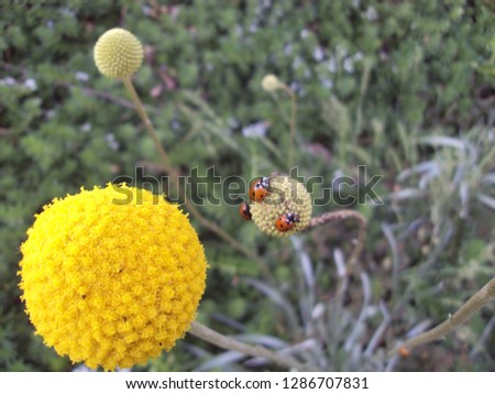Ladybugs on Flowers