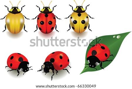 Ladybugs over white background. Vector illustration