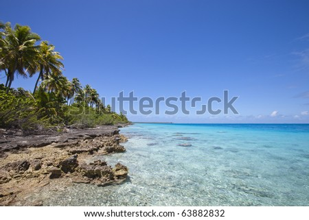 Lagoon view and reef front of palm tree