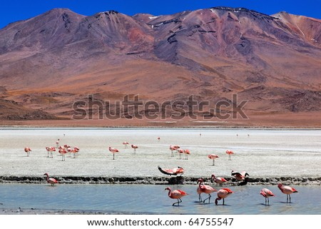 Laguna Celeste, Altiplano, Bolivia, South America