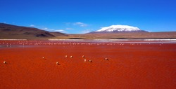 Laguna Colorada with numerous flamingo birds on the background of snow-capped volcano in the Bolivian Andes