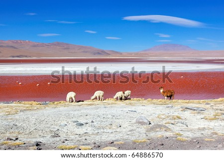 Laguna Colorado, Altiplano, Bolivia, South America