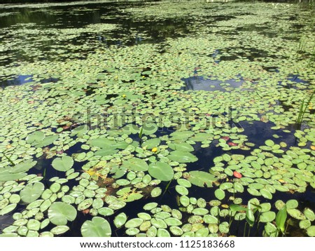 Lake Densely Populated With Lily Pads #1125183668
