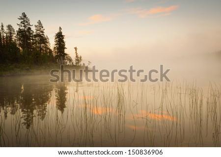 lake, fog and tree at sunrise