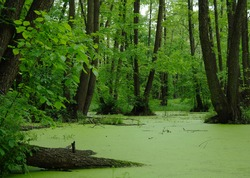 Lake in a wood green and trees