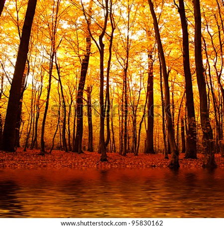 Stock Photo Lake in autumn forest. Beautiful nature background.