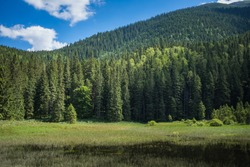 Lake in the mountains. Coniferous forest