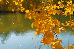Lake in the park. Autumn landscape. Reflection in water. Lake in autumn. Autumn trees and plants. Autumn Park. Yellow, orange, red, brown, green leaves. Blue sky