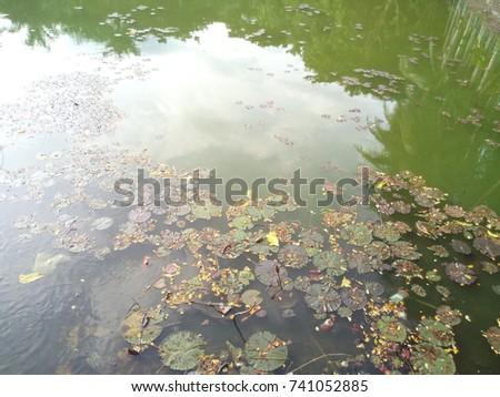 lake lily-pads #741052885