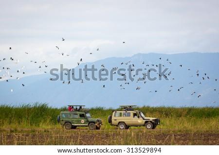 LAKE MANYARA, TANZANIA - AUGUST 4, 2015: Safari cars driving inside the Lake Manyara National Park with birds flying around in northern Tanzania, Africa