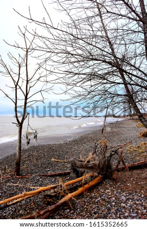 Lake Michigan shoreline in January after a big wind and wave storm coating the branches with ice and icicles hang from the limbs with small waves continuing to crest along the shoreline.