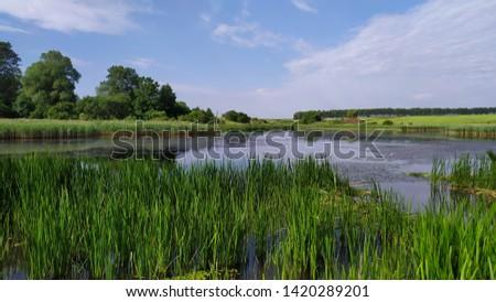 lake pond pond pond rural reeds #1420289201