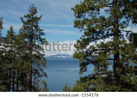 Lake Tahoe View through Conifers