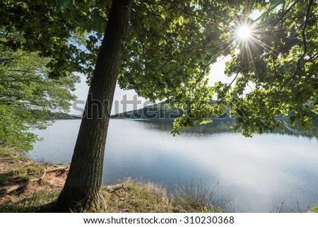 lake view with tree in the sun