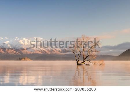 Lake Wanaka famous lone tree