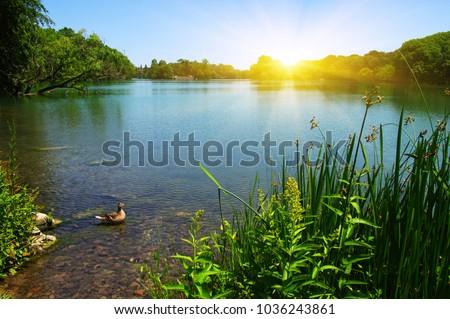 Lake water, shore and sun.