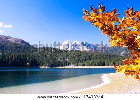 Lake with autumn tree in Durmitor National Park, Montenegro