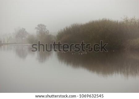 Stock Photo Lake with Canada geese, reflection of the trees in the water. Reeuwijk, the Netherlands.