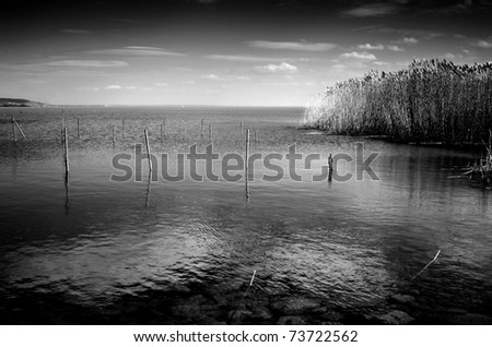 Lake with reed in black and white