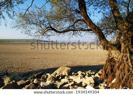 lakes and trees drying up as a result of global warming Stok fotoğraf ©