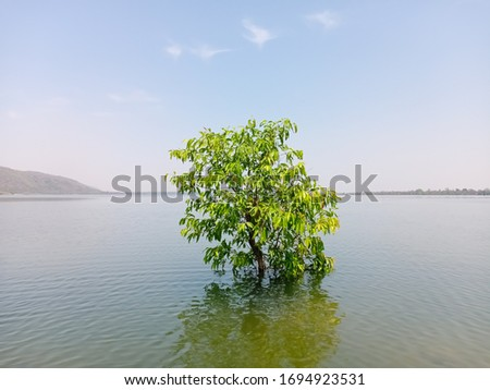 Lakeside blue water with island and green tree . blue sky,water surface with brightness, shore and sunny day .