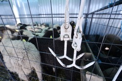 Lambs enclosed behind a metal fence before being slaughtered for Easter/ Detail of two meat hooks hanging on a fence with white lambs in background/ Easter sheep slaughter concept.