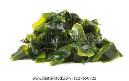 Laminaria (Kelp) Seaweed Isolated on White Background. fresh Laminaria or kelp Seaweed Isolated on White Background. konbu, alga