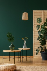 Lamp above tables with plants in green natural living room interior with pouf on carpet. Real photo