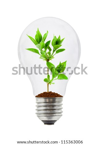 Lamp and plant isolated on white background