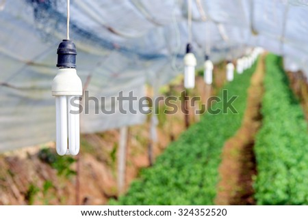 Lamp for lighting plant in greenhouse