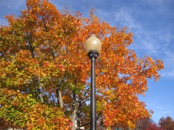 lamp post against orange fall leaves.