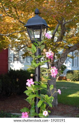 Lamp Post with Mandevilla in full bloom